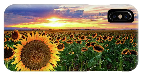 IPhone Case featuring the photograph Sunflowers Of Golden Hour by John De Bord
