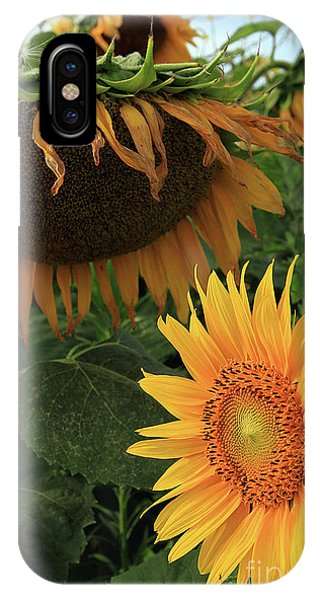 Sunflowers Past And Present IPhone Case