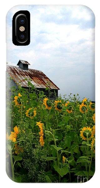 Sunflowers Rt 6 IPhone Case