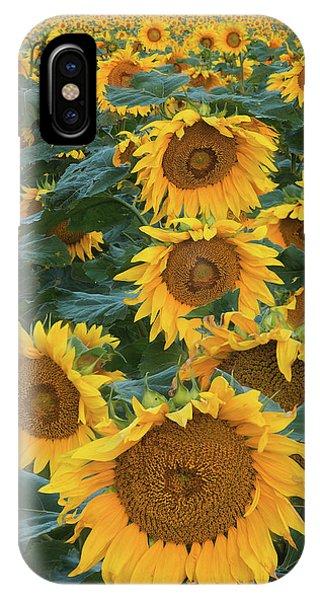 Sunflower Seeds iPhone Case - Sunflowers by Steve Gadomski