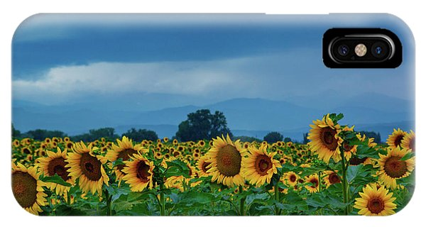 Sunflowers Under A Stormy Sky IPhone Case