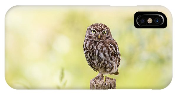 Sunken In Thoughts - Staring Little Owl IPhone Case