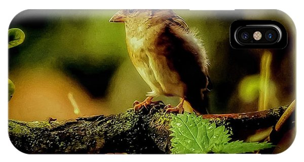 IPhone Case featuring the photograph Sunlight Bird by Cliff Norton