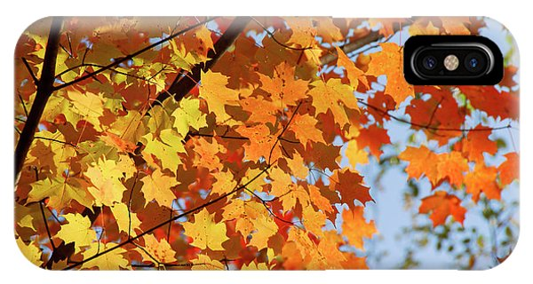 IPhone Case featuring the photograph Sunlight In Maple Tree by Elena Elisseeva