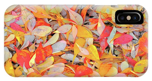 Sunlight On Barberry Leaves IPhone Case