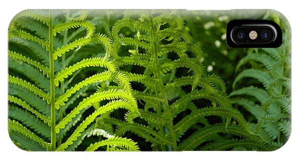 IPhone Case featuring the photograph Sunlit Fern by Mike Evangelist