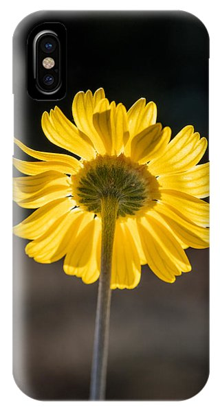 Sunlit Four-nerve Daisy  IPhone Case