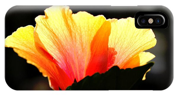 Sunlit Hibiscus Phone Case by Diane Merkle