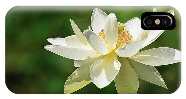 Sunlit Lotus Blossom IPhone Case