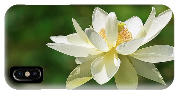 Sunlit Lotus Blossom IPhone Case