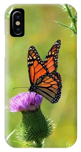 Sunlit Monarch  IPhone Case