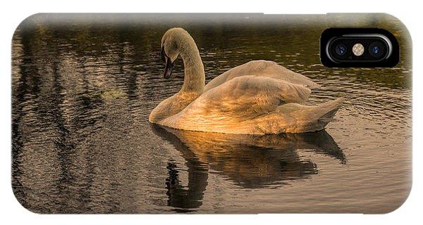 Sunlit Mute Swan  IPhone Case