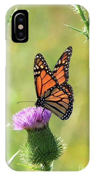Sunlit Monarch IPhone Case