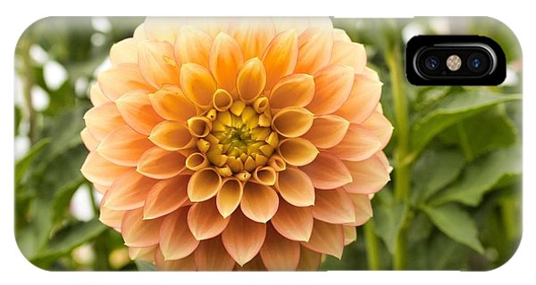 IPhone Case featuring the photograph Sunny Dahlia by Brian Eberly