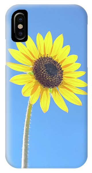 Sunny Delight IPhone Case