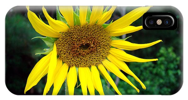 Sunny Sunflower IPhone Case