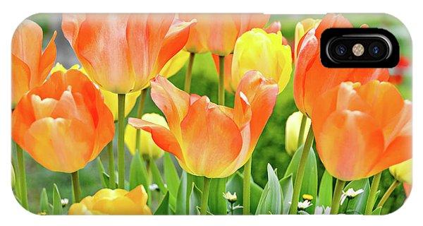 Sunny Tulips IPhone Case