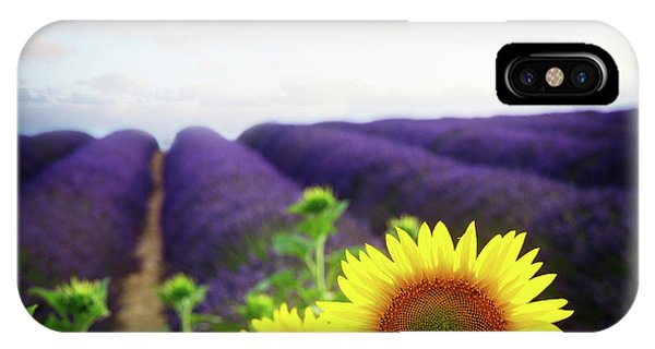 Sunrise Over Sunflower And Lavender Field IPhone Case