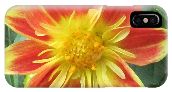 Sunrise Petals IPhone Case