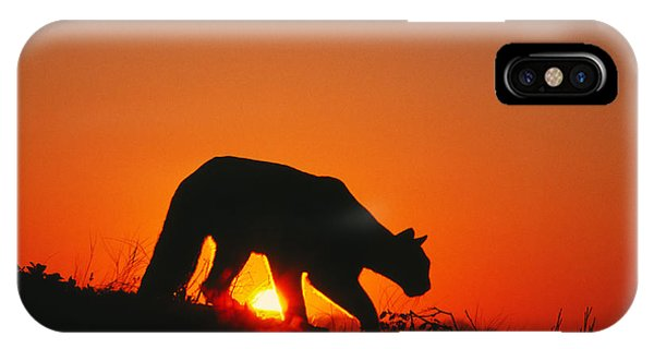 Sunrise Stalk IPhone Case