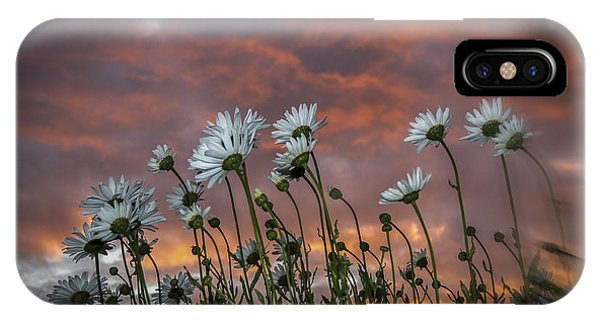 Sunset And Daisies IPhone Case