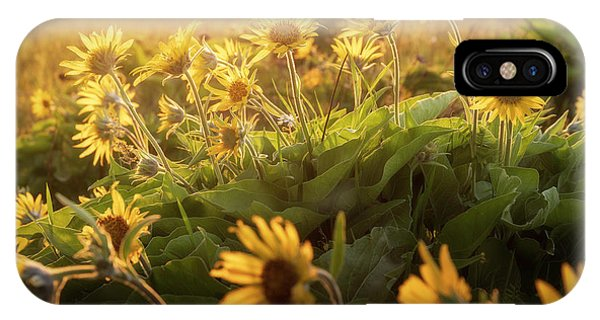 Sunset Balsam IPhone Case