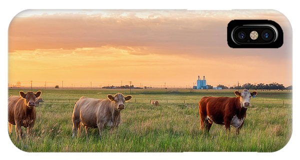 Sunset Cattle IPhone Case