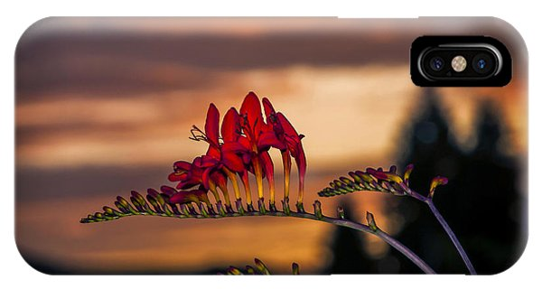 Sunset Crocosmia IPhone Case