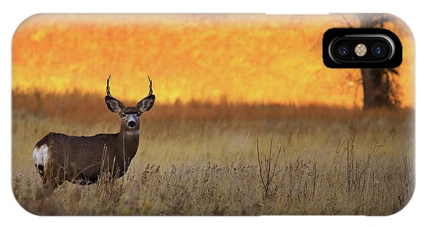 Mule Deer iPhone Case - Sunset Lover by Kadek Susanto