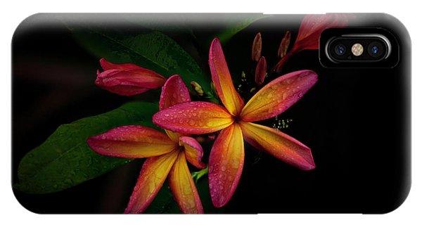 Sunset Plumerias In Bloom #2 IPhone Case