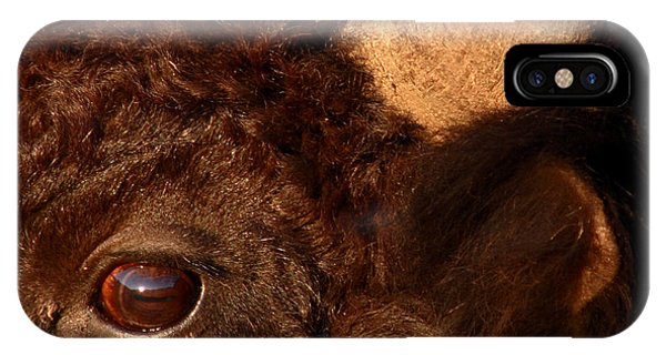 Sunset Reflections In The Eye Of A Buffalo IPhone Case