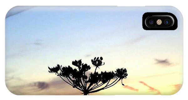 Sunset Seedhead Silhouette  IPhone Case