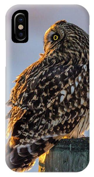 Sunset Short-eared Owl IPhone Case