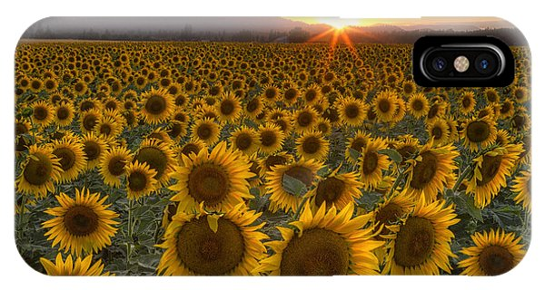 Sunflower Seeds iPhone Case - Sunshine And Happiness by Mark Kiver