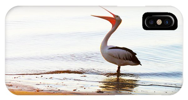 Sunshine Coast Pelican IPhone Case
