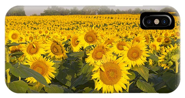 Sunshine Flower Field IPhone Case