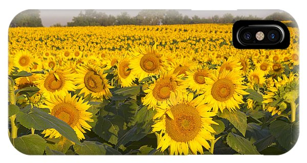 Sunshine Flower Field IPhone Case