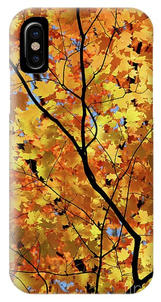 IPhone Case featuring the photograph Sunshine In Maple Tree by Elena Elisseeva