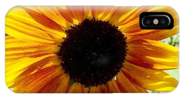 Sunshine Sunflower IPhone Case