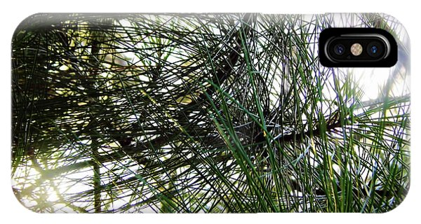 Sunshine Through Pine Needles IPhone Case