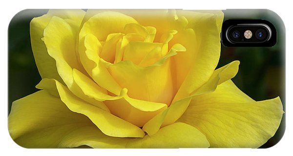 Sunsprite Rose 2 IPhone Case
