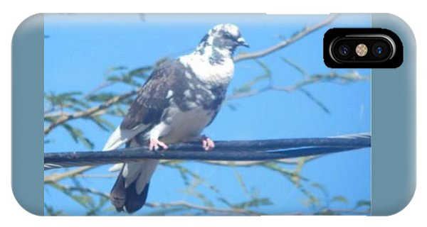 Suspicious Bird IPhone Case
