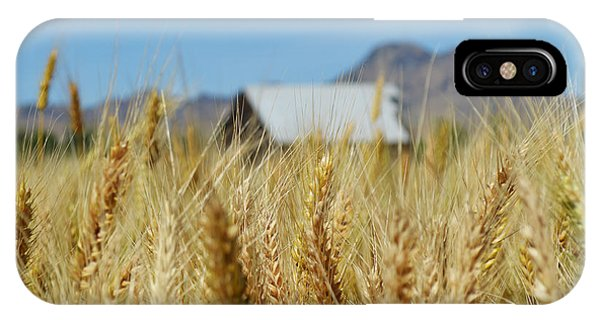 Sutter Buttes Wheat  IPhone Case