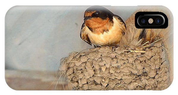 Avian iPhone Case - Swallow On Nest by Kae Cheatham