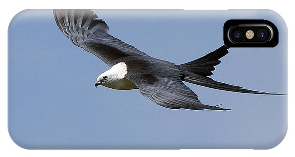 Swallow-tailed Kite IPhone Case