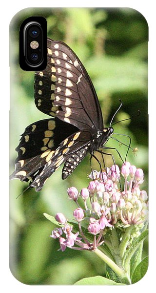Swallowtail Butterfly 3 IPhone Case