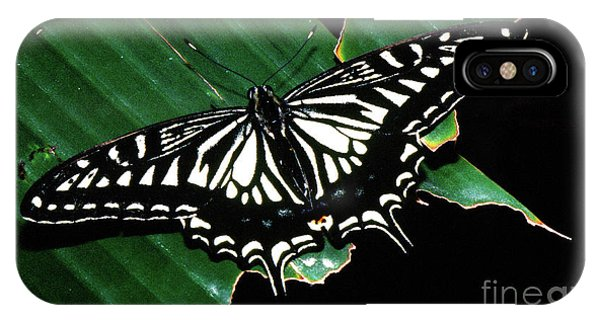 Swallowtail Butterfly- Close IPhone Case