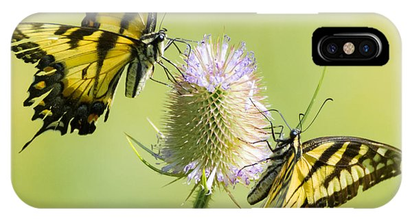Swallowtails On Thistle  IPhone Case