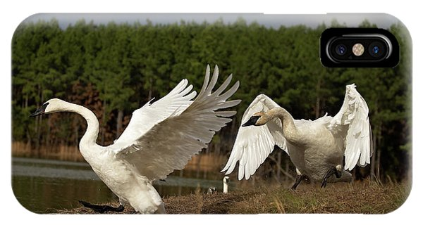 Swan Fight IPhone Case