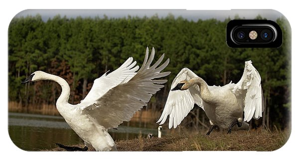 Swan Fight IPhone Case